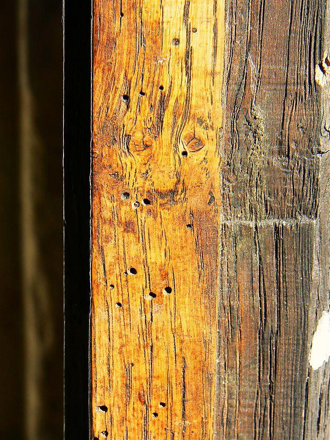 Dřevěný trám napadený červotočem