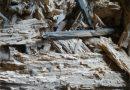 Dřevo rozrušené larvami tesaříka krovového